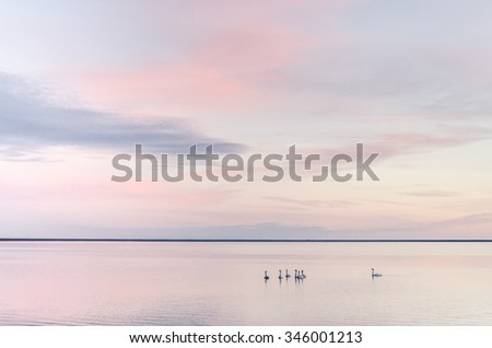 swans on beautiful lake in sunset - stock photo