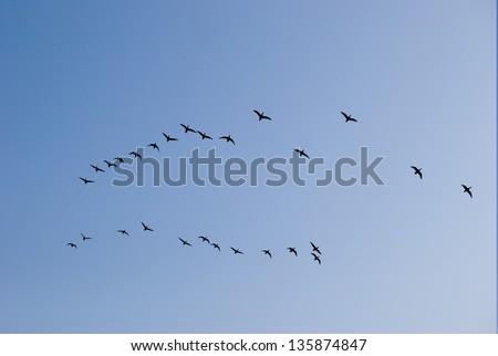 Swarm of Birds - stock photo
