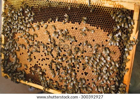 Swarm of hardworking bees on beautiful orange wooden frame of honeycomb, close up - stock photo