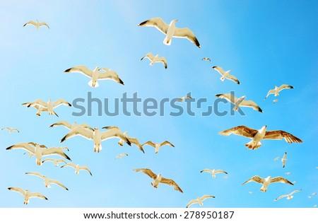 Swarm of sea gulls - stock photo