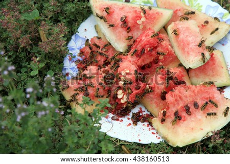 Swarm of wasps eating a watermelon - stock photo