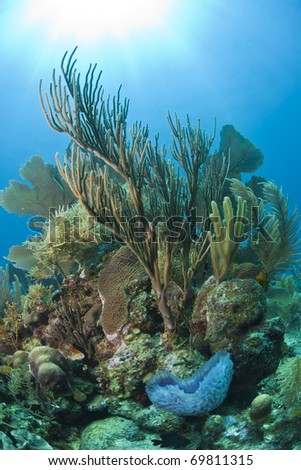 Swaying soft corals in the gentle current - stock photo