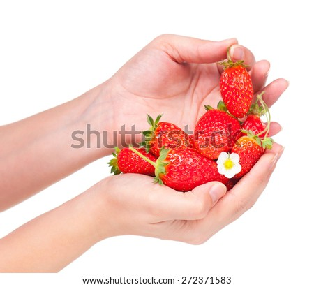 Sweat strawberries in the woman hands over white background - stock photo