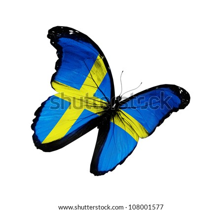 Swedish flag butterfly flying, isolated on white background - stock photo