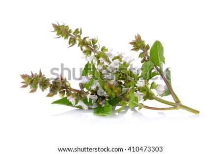 Sweet Basil flower on white background - stock photo