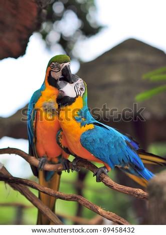 sweet birds - stock photo