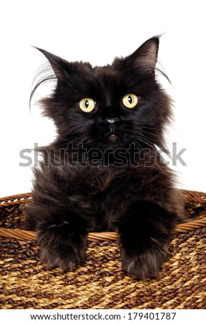 Sweet black cat is sitting in a basket on a white background - stock photo