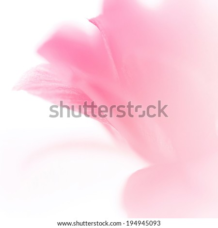 sweet color flowers in soft style for background - stock photo