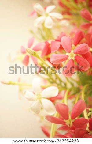 sweet color flowers in soft style on mulberry paper texture for background - stock photo