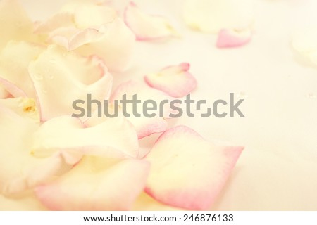 sweet color rose petals for romantic background  - stock photo