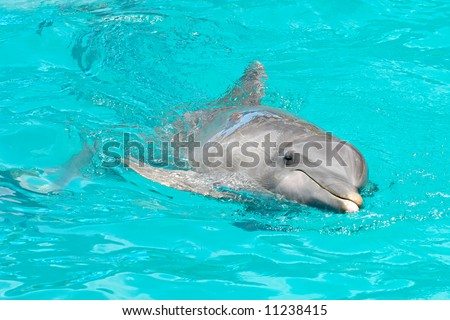 Sweet dolphin is swimming in the water - stock photo
