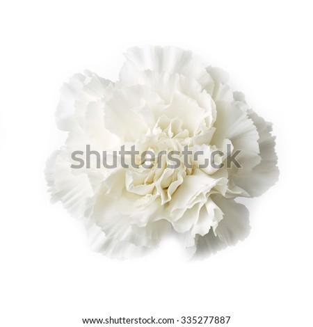 sweet flower on white isolated - stock photo