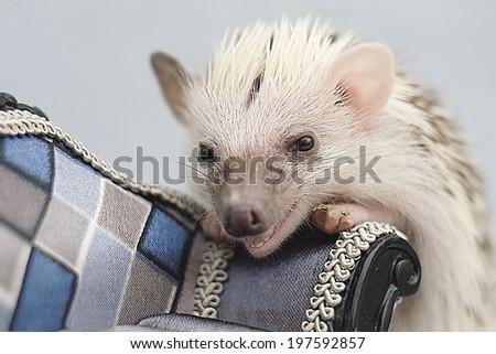 sweet fun cute hedgehog baby - stock photo