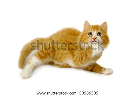 Sweet kitten is looking very afraid. Taken on a clran white background - stock photo