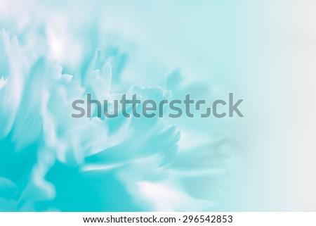 Sweet pastel color petal carnation in blur and soft style for background - stock photo