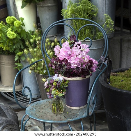 Sweet pea, Lathyrus odoratus, flowers in a purple vase standing on cast-iron chair. - stock photo