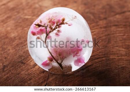 sweet pink flower frozen in ice cubes, on wooden background - stock photo