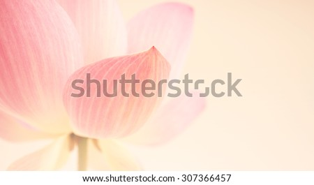 sweet pink lotus in soft and blur style for background - stock photo
