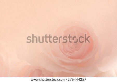 Sweet pink rose, Wedgwood rose, English rose with paper texture for the background. - stock photo
