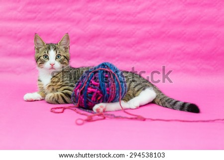 sweetest kittens - kitten playing with woolen  - stock photo