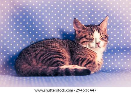 sweetest kittens - little cat sleeping - vintage style - stock photo
