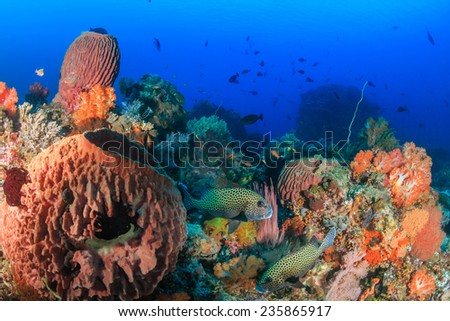 Sweetlips, sponges and colorful corals on a tropical reef - stock photo
