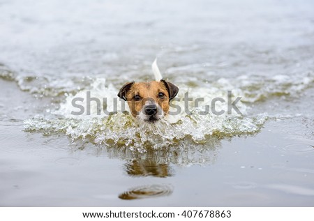 Swimming dog making water wave and looking into camera - stock photo