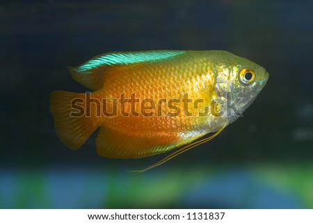 swin aquarium - stock photo