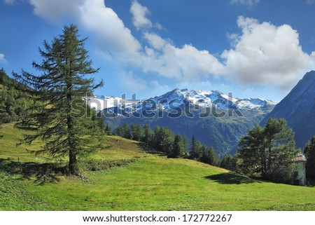 Swiss Alps. Green alpine meadow on a hillside and surrounded by pine forests.  Distance - snow-capped mountains - stock photo