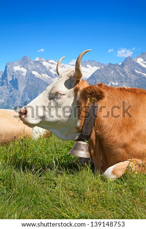 Swiss cow in the alps - stock photo