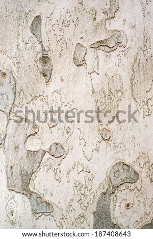 sycamore bark varied texture and pattern design - stock photo