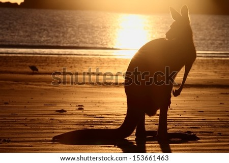 symbol s of Australia the beach and kangaroo a rare sight together and in silhouette  - stock photo