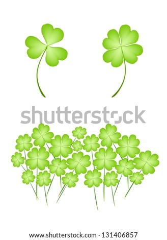 Symbols for Fortune and Luck, Illustration of Fresh Four Leaf Clover Plants or Shamrock for St. Patricks Day Celebration - stock photo