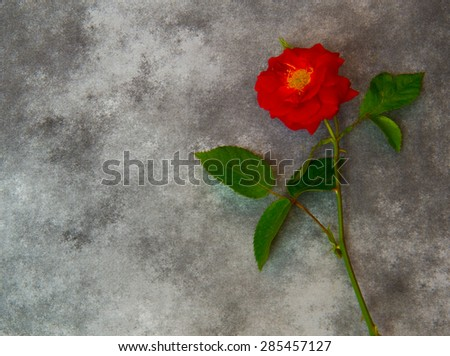 Sympathy card with rose - stock photo