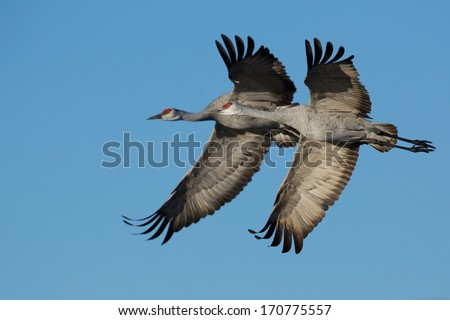 Synchronized Flying - stock photo
