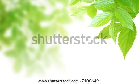Synthetic background image of foliage leaf - stock photo