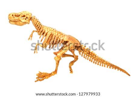 T-Rex dinosaur skeleton white - stock photo