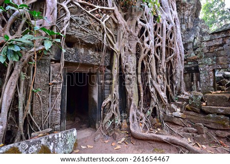 Ta Phrom temple ruins and tangled tree roots in Angkor, Siem Reap, Cambodia  - stock photo