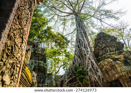 Ta prohm ancient tree on the ruin temple, locate at Angkor, Siem Reap Province, Cambodia, This well know place also one of famous movie's Tomb Raider location. - stock photo