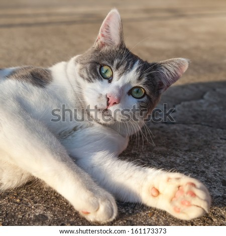 Tabby and white cat lying on the concrete of the street looking surprised - stock photo