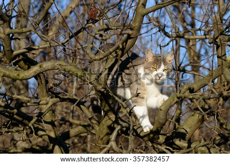 Tabby and white cat with bald tree branches - stock photo