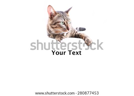 tabby cat blurry on blank banner. Place for text - stock photo