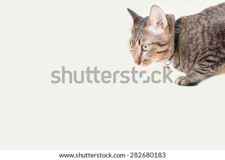 tabby cat blurry with cream color background. Place for text - stock photo