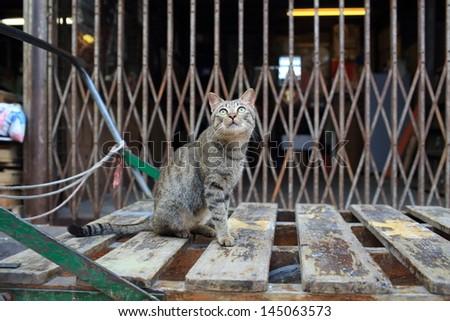 Tabby cat curiously look around - stock photo