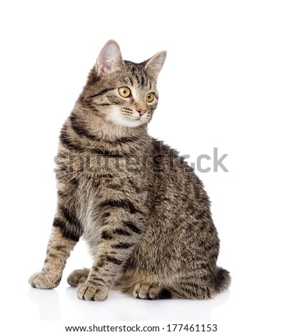 tabby cat looking away. isolated on white background - stock photo