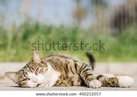 Tabby cat lounging on the ground and bathing in the first rays of the summer sun - stock photo