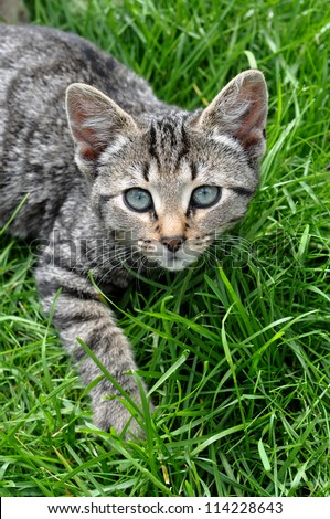 Tabby cat lying on green grass - stock photo