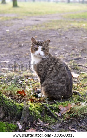 tabby cat outside - stock photo