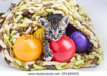 Tabby cat playing with food ball - stock photo