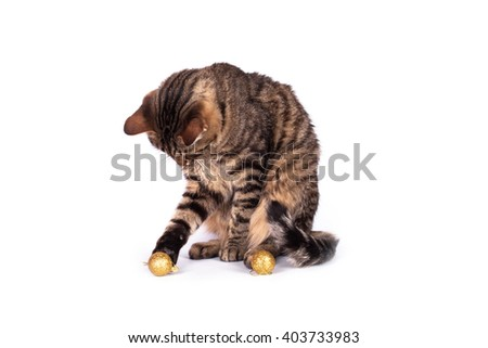 Tabby cat playing with toys. Cat on a white background - stock photo
